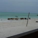 Zanzibar, 2010